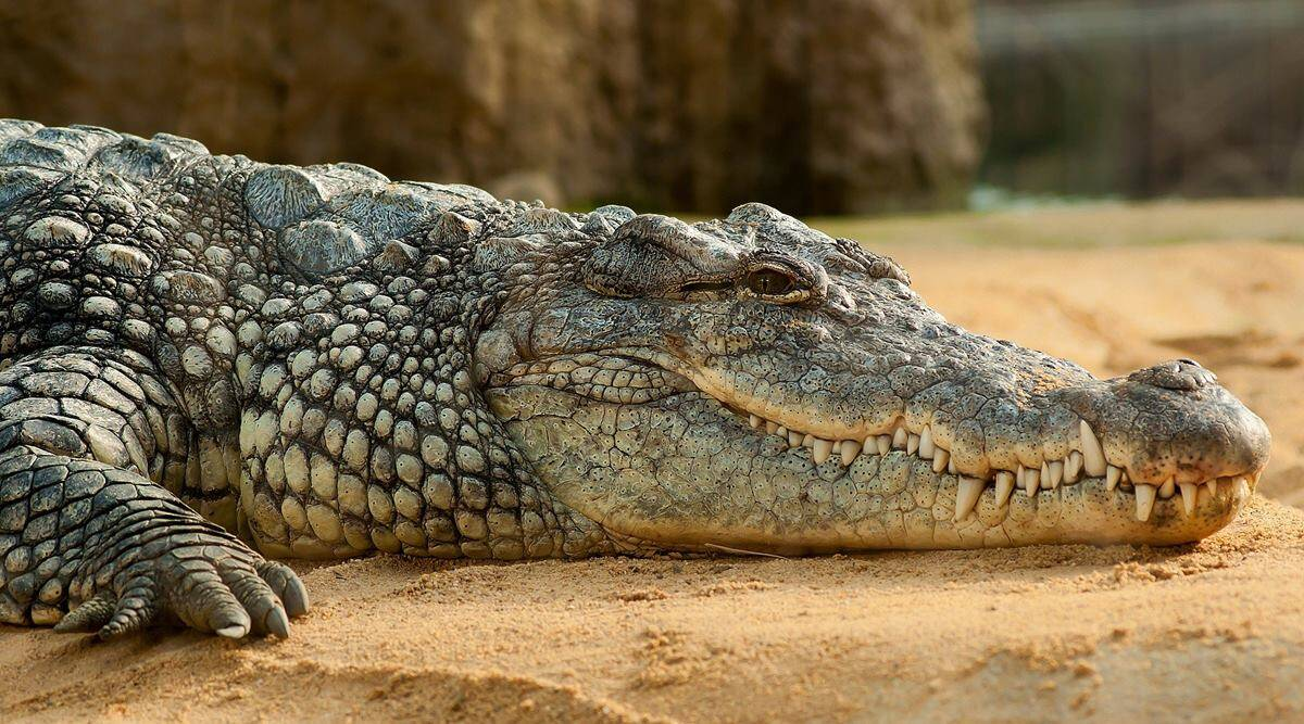 alligator helium experiment viral video, trending