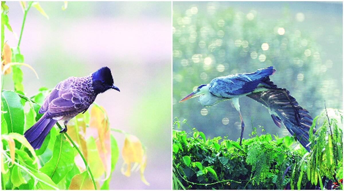 pune birds, pune birds species, pune UNESCO World Heritage Region, pune global biodiversity hotspots, pune biodiversity, indian express news