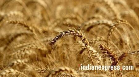 minimum support price, MSP scare, Farm bill, Wheat farmers, Paddy farmers, Agriculture news, Indian express news