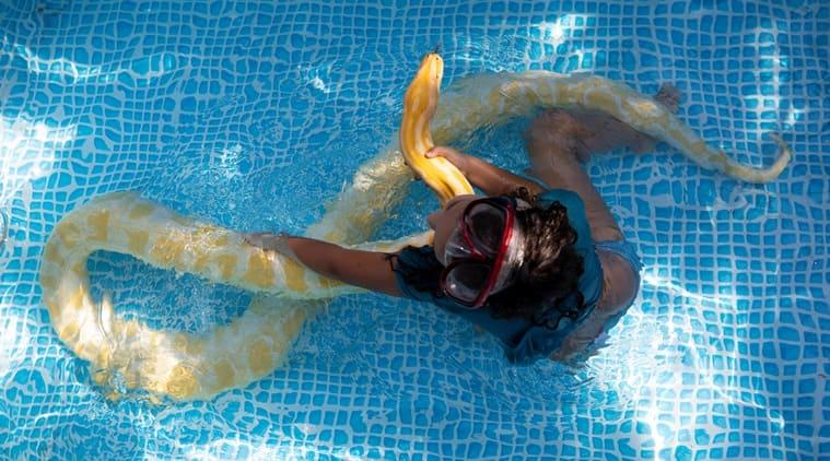 Eight-year-old, pet python, Israeli girl pet python, python, swimming pool, Israel, trending news, Viral video, Indian Express news