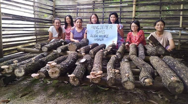 Nagaland, Nagaland mushroom business, Nagaland's Mokokchung district, Oyster mushroom cultivation, Mushroom ivestments, Mushroom growing farmers, Indian express