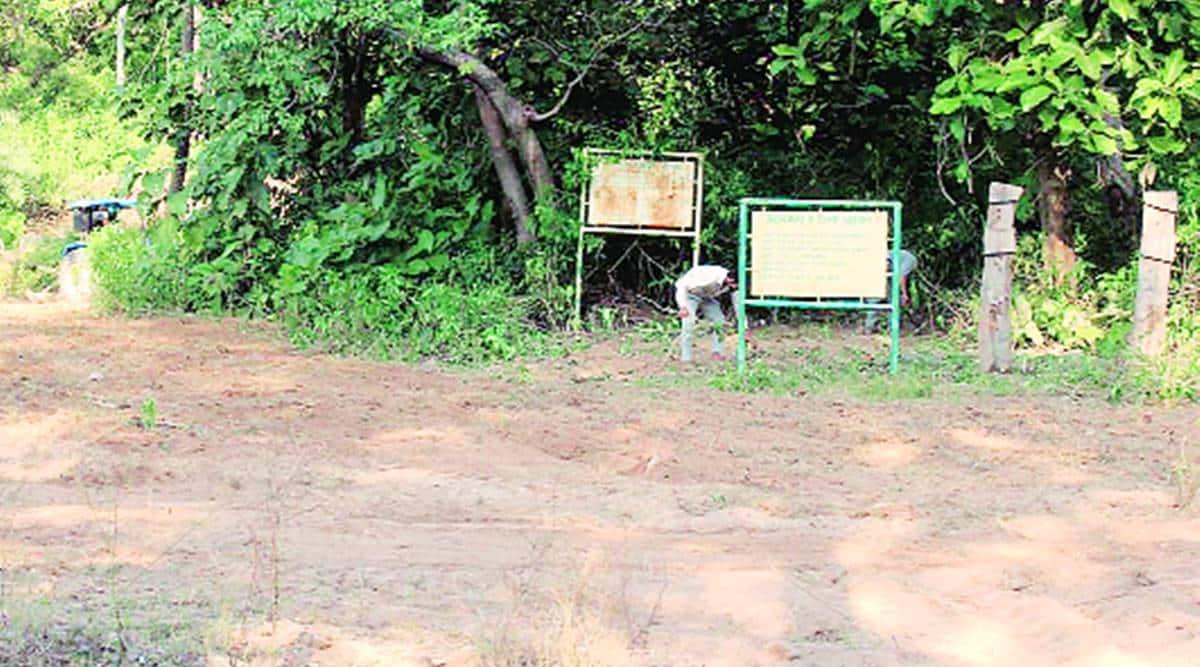 Berwala Bird Safari being cleaned and repaired. (Express photo)
