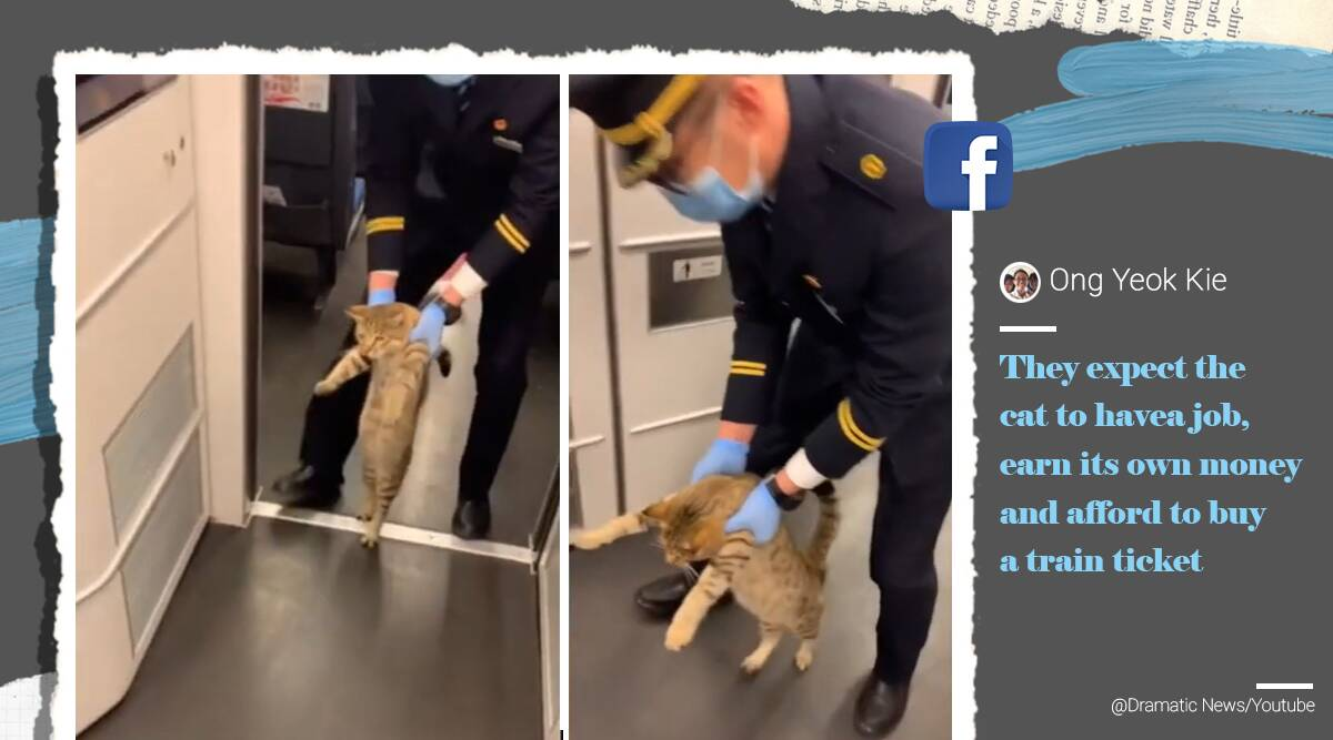 cat escorted out of train, train guard removes cat, cat without ticket, train staff remove cat coach, cat video, viral videos, funny cat videos, indian express