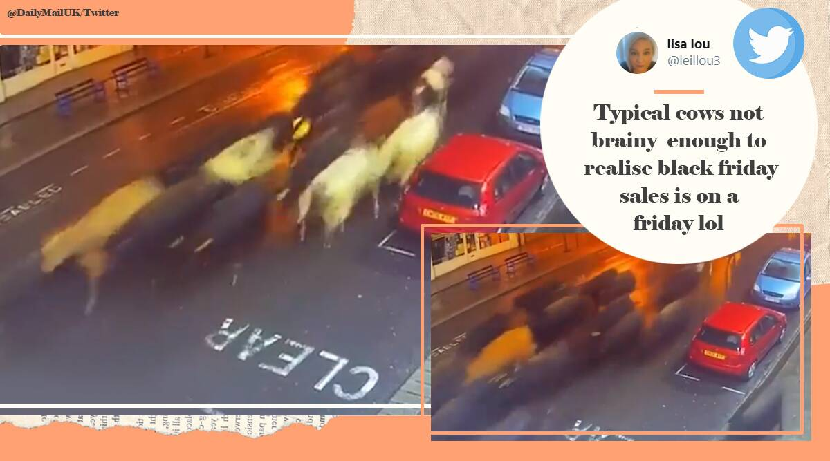 Cow stampeded, Cow herd running, London Street, Cow herd running viral video, Trending news, Indian Express news