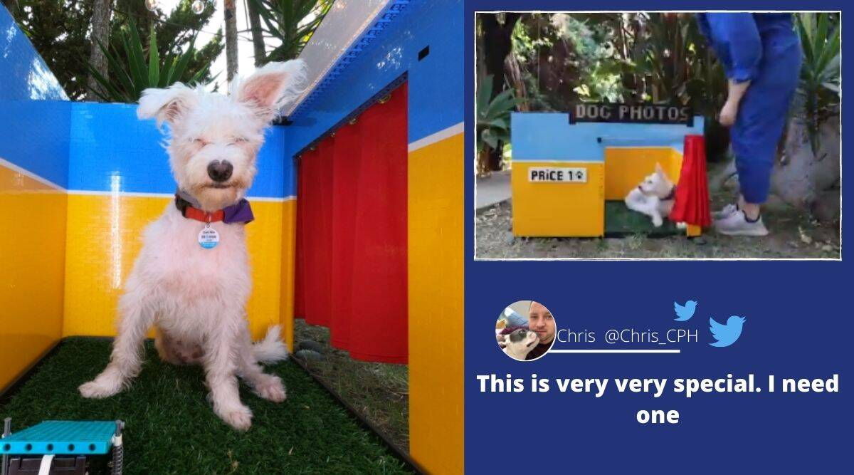 Dog, Dog photo booth, dog selfies, Simone Giertz, Simone Giertz dog photo booth, Lego photo booth for dogs, Viral video, Dog videos, Trending news, Indian Express news