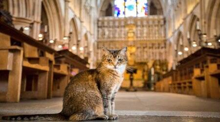church holds memorial service for cat, cathedral cats, Doorkins the magnificat, Southwark Cathedral, Doorkins memorial service, Viral cat memorial service, Indian Express News