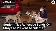 Vet Student Ties Reflective Bands On Strays To Prevent Accidents