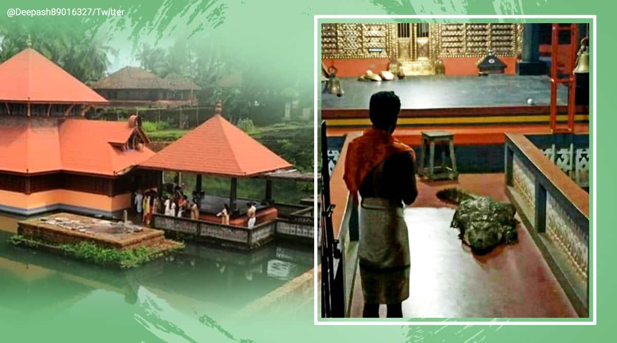 Kerala temple crocodile, Babiya crocodile Kerala temple, Kerala Kasargod temple, Sri Ananthapadmanabha Swamy Lake Temple, Ananthapura temple crocodile, Ananthapadmanabha Swamy Lake Temple crocodile, Kerala news, trending news, Indian Express news