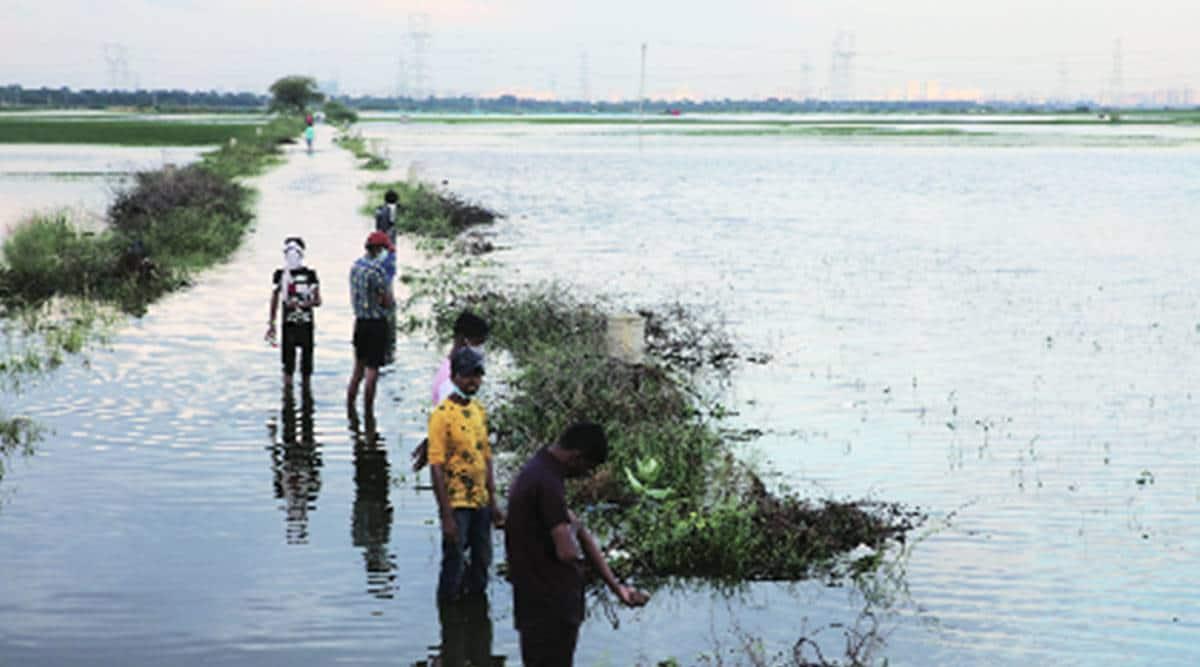 Najafgarh lake restoration, Delhi water supply, Delhi farmers, Delhi government, Delhi news, Indian express news