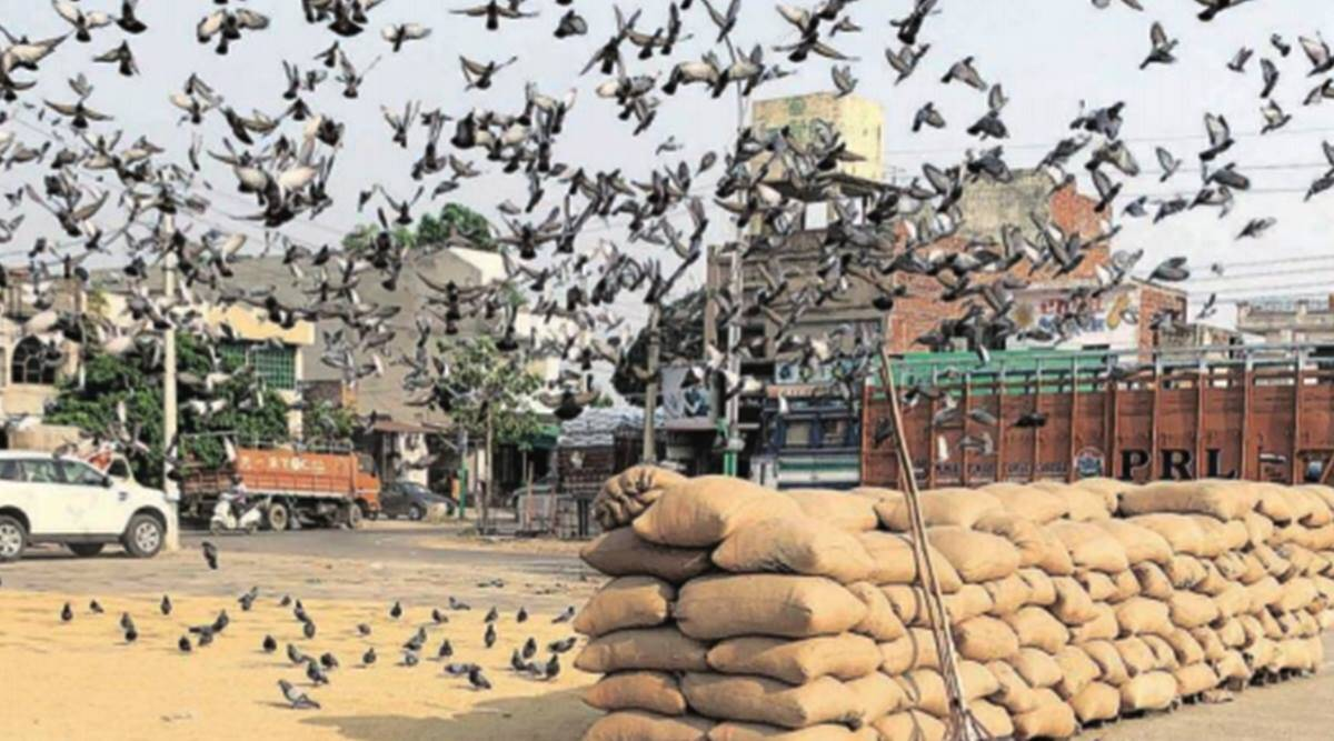 Central farm laws to hit Punjab where it hurts most: mandi and rural development boards