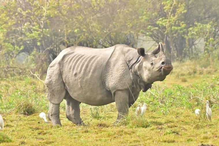 Kaziranga opens to tourists, Kaziranga National Park, Kaziranga Covid lockdown, Assam gobvernment, Assam CM Sarbananda Sonowal, Assam news, Indian express