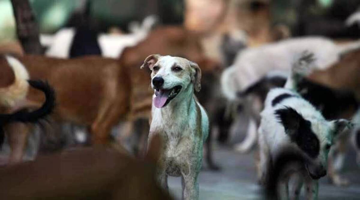 Gurgaon family says targeted for feeding stray dogs