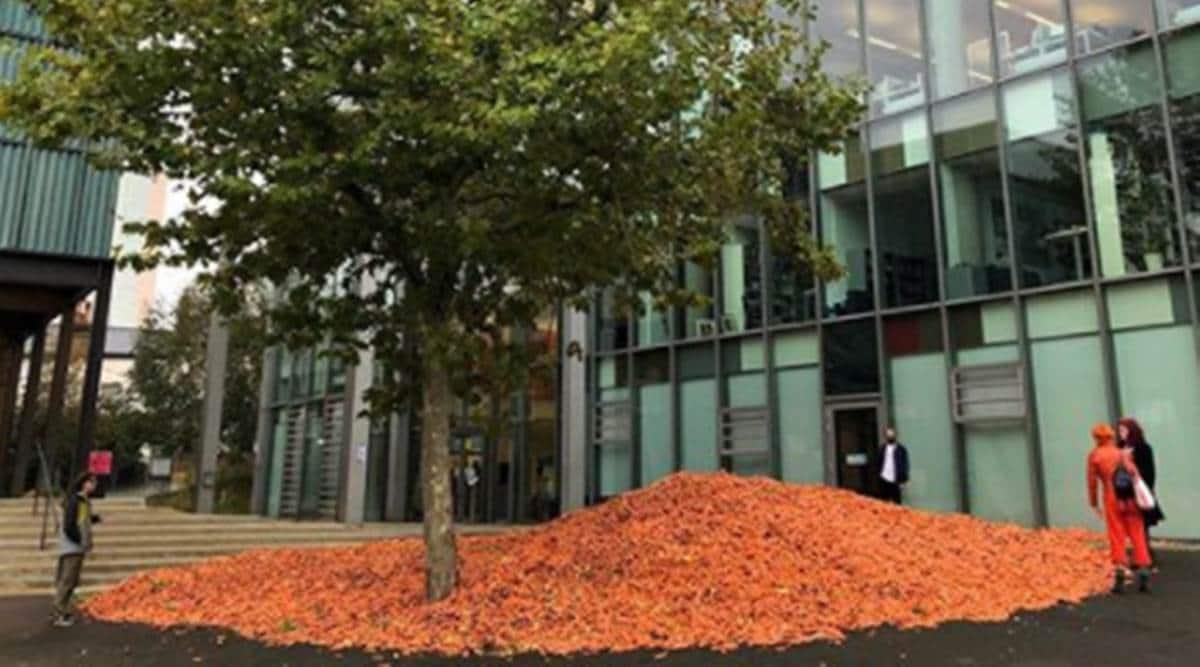 art, artwork, art installation involving carrots, London university carrot art installation, carrots and art, indian express news