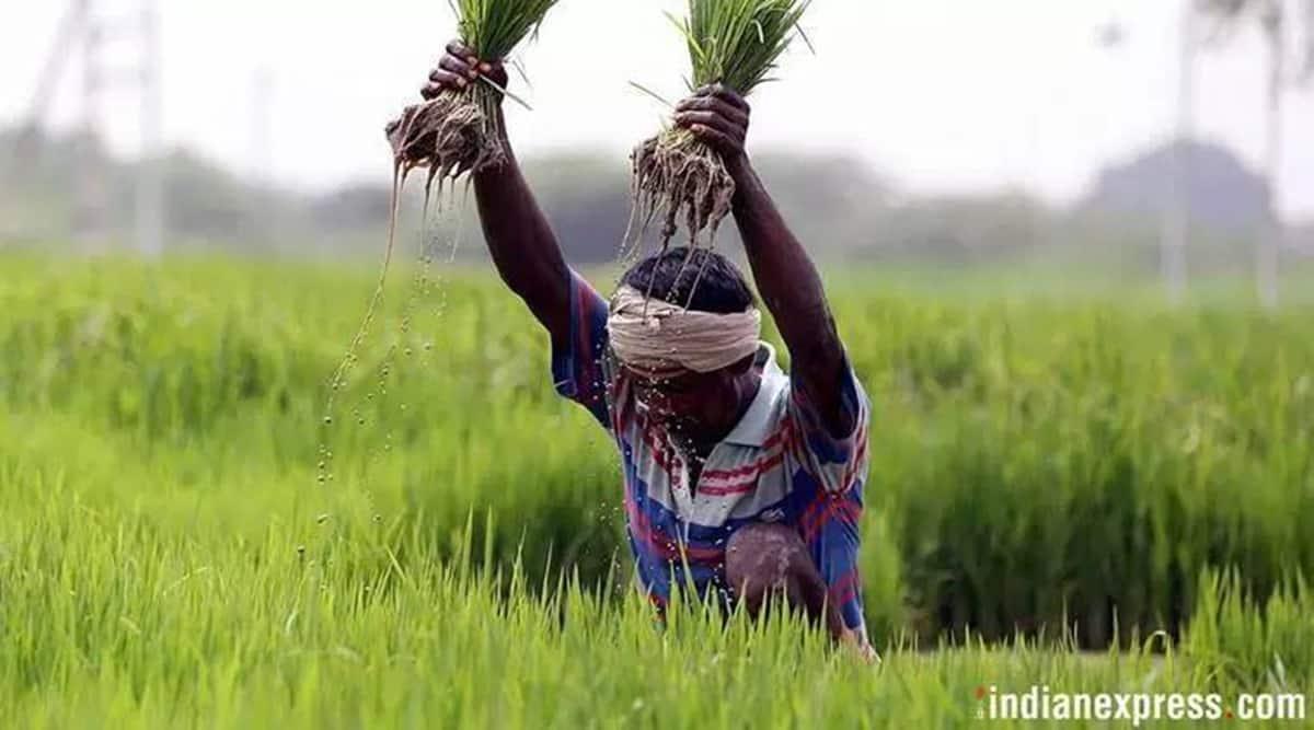 Bombay hc, maharashtra farmers, maharashtra farm loans, maharashtra banks farm loans, maharashtra farmers loan eligibility, indain express news