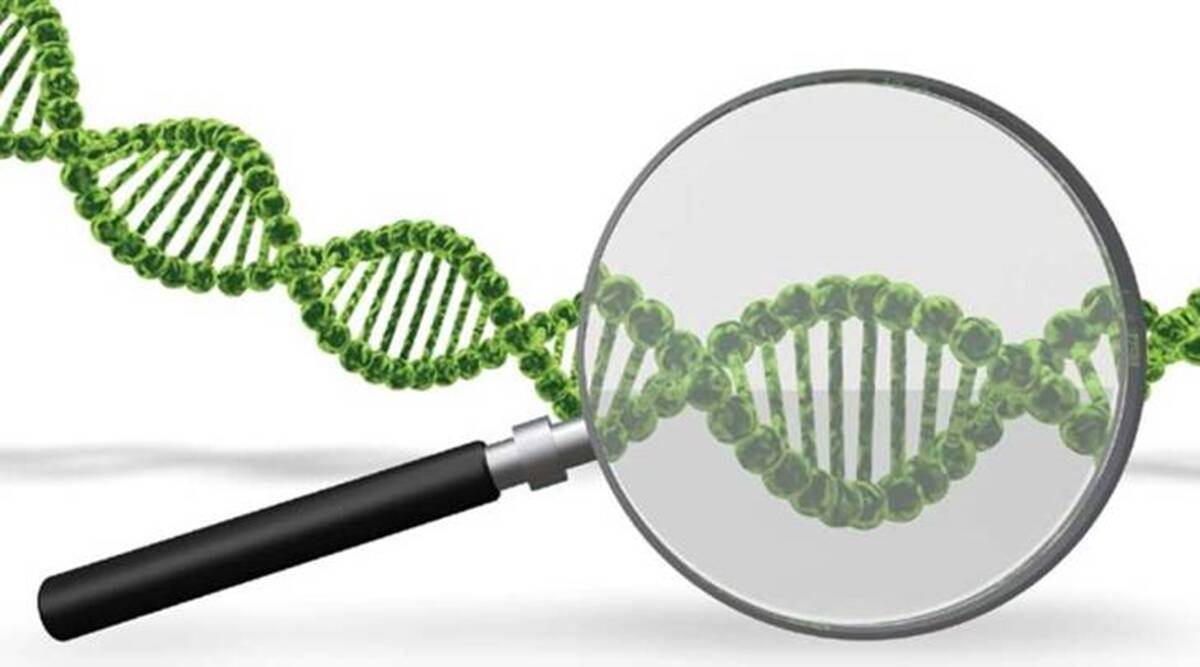 forensic, DNA