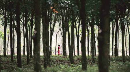 World's forests, Forest fires, Deforestaion, Covid-19 impact on forests, devastating year' for world's forests, world news