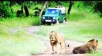 gir national park, gir national park tour, lion safari in gir national park, gir national park tourism, indian express news