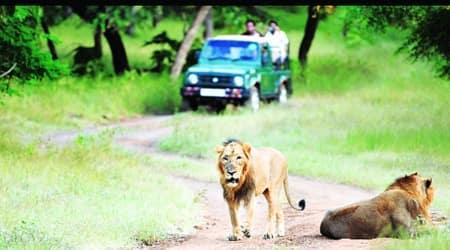 gir national park, gir national park tour, lion safari in gir national park, gir national park tourism, indian express news