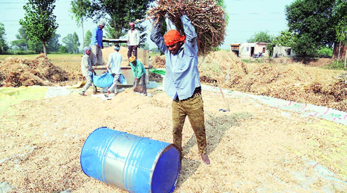 On crop procurement e-way in Haryana, long wait for farmers, delayed payment