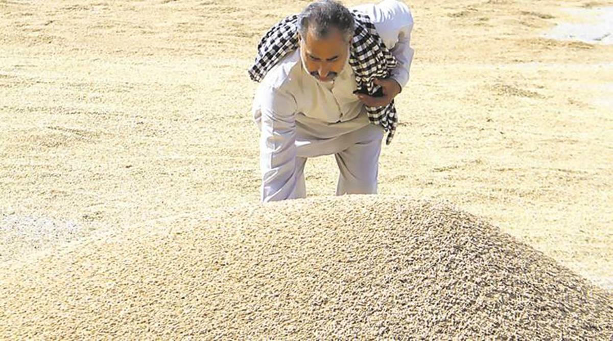 paddy procurement, punjab farmers, Mohali district administration, MOhali news, Punjab news, Indian express news