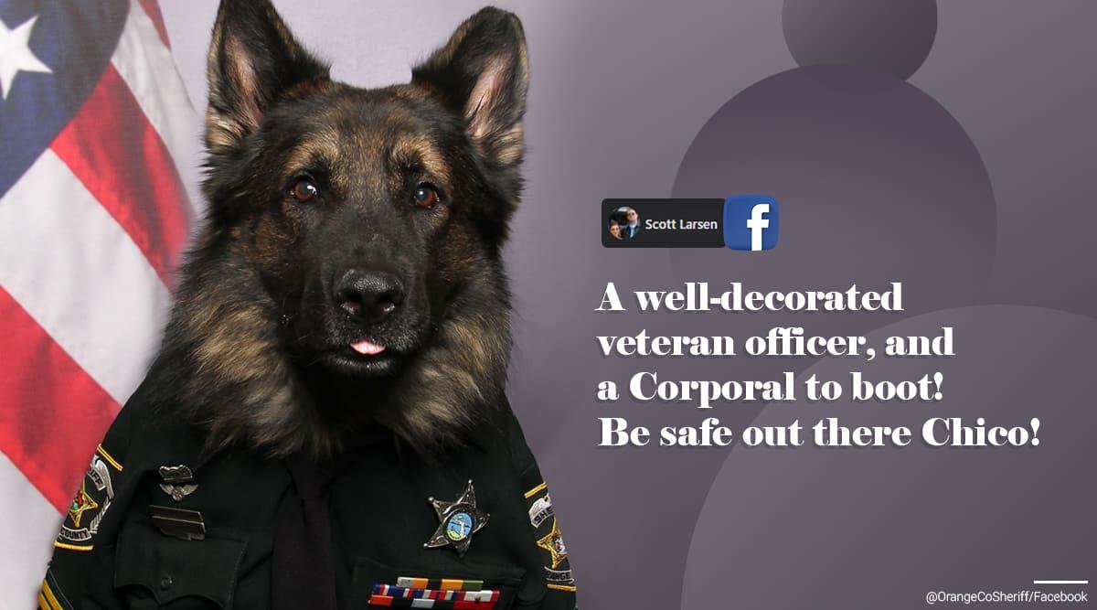 Police Dog Florida, police dog badge photo, Dog police officer uniform photo shoot, Police dog ID badge photo, Orange County Sheriff's Office, viral news, trending news, Indian Express news.
