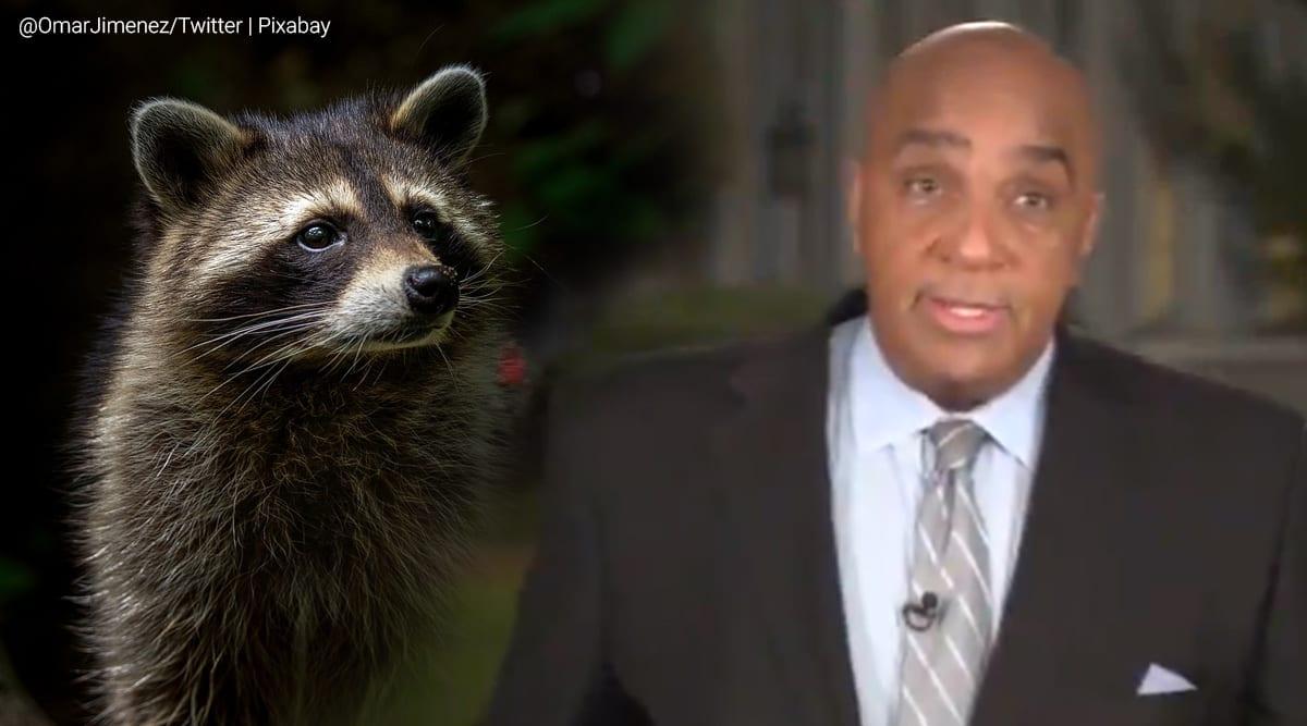 CNN reporter, Raccoon encounter, White House, White house raccoon attacks, viral video, Trending news, Indian Express news.