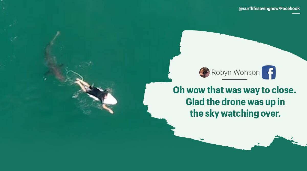 Drone footage shark, Surfer, Australia, Great white shark, Shark drone footage, trending news, Indian Express news.