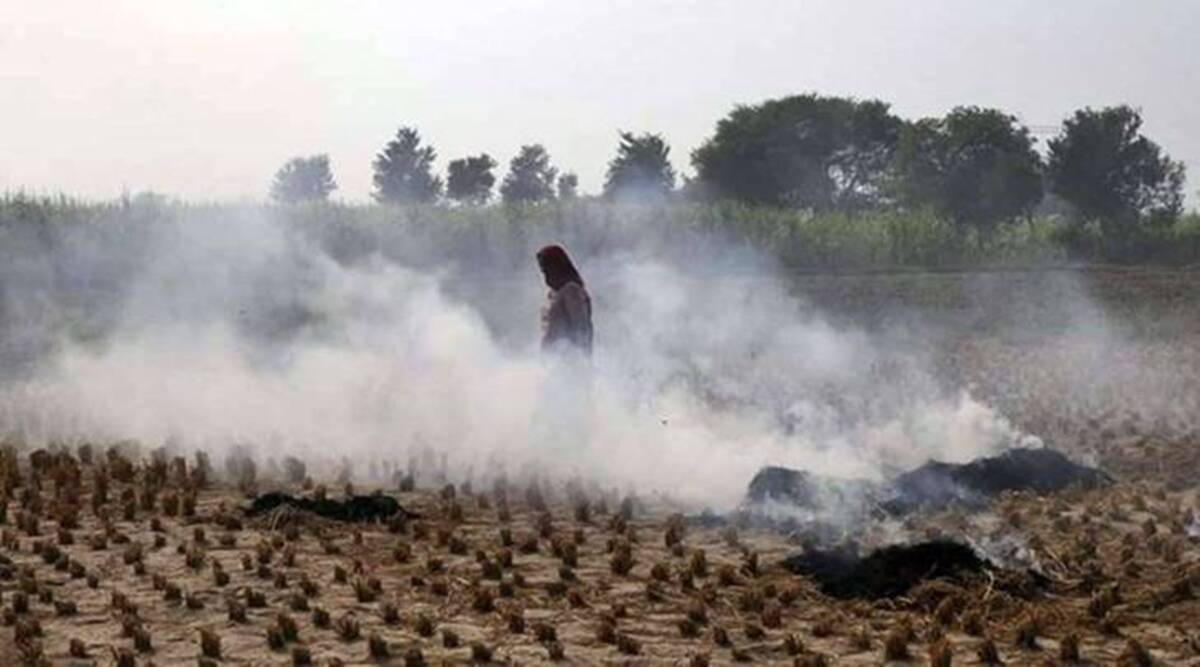 Punjab stubble burning, Punjab air pollution, Amritsar stubble burning this season, Punjab news, Punjab AQI, India news, Indian express