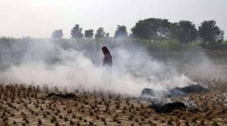 Stubble burning, farmers stubble burning, Haryana