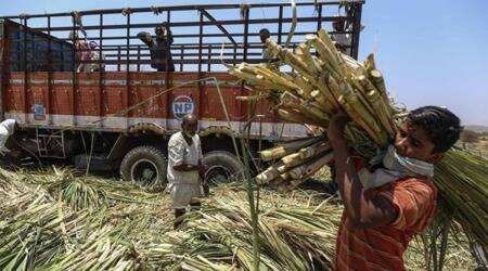 Sugar mills in Maharashtra warn of delayed payment to farmers due to bank policies