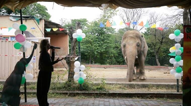 Kaavan elephant, relocation Cambodia farewell party, Islamabad Zoo, Elephant relocation farewell party, Kaavan elephant abuse, elephant farewell party, Kaavan elephant farewell party, Trending news, Islamabad Zoo conditions, Indian Express news.