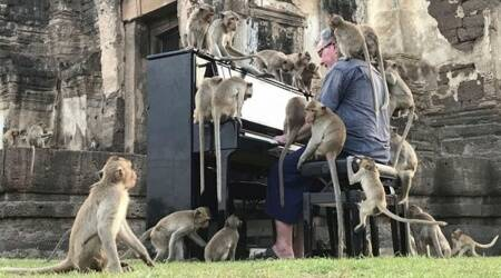 British pianist, piano performance for monkey, Thailand, Viral video, coronavirus virus-induced hunger monkeys, Paul Bartonas piano for monkey, music for monkeys, Indian Express news.