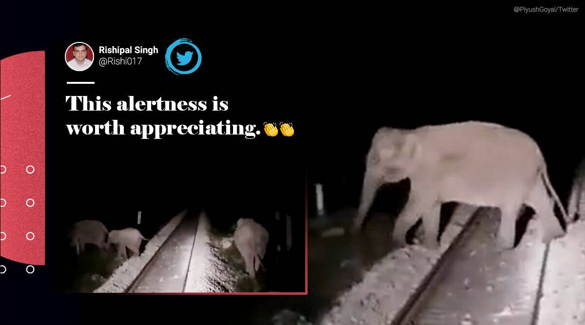 West Bengal, train stopped animal crossing, train stopped elephants track crossing, animal crossing, animal railway track cross, Viral video, Piyush Goyal, Trending news, Indian Express news.