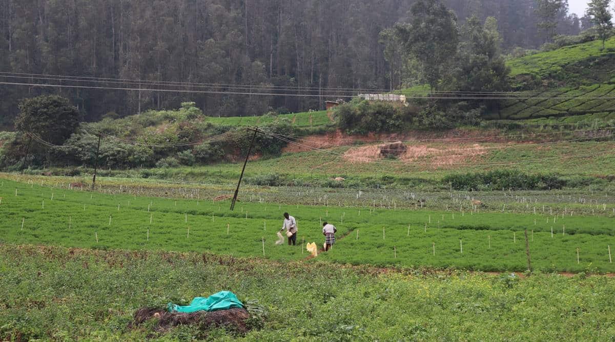 Sillahalla Pumped Storage Hydroelectric Project (SPSHEP), tamil nadu niligiris district, niligiri tamil nadu hydroelectric project, Bembatty village on Sillahalla stream