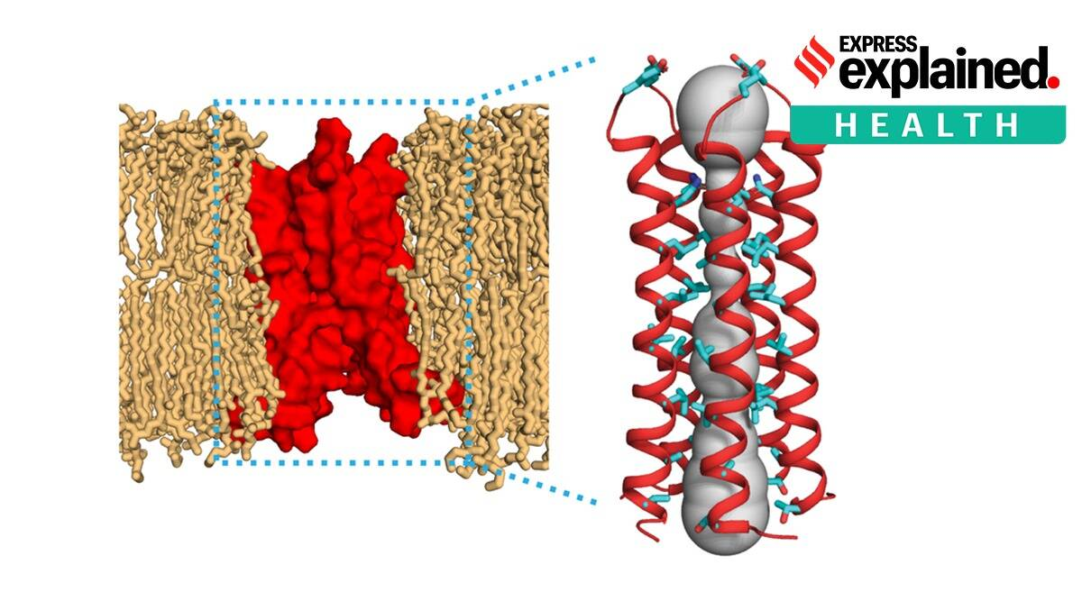 MIT study on Covid, envelope protein E, Covid-19 structure, SARS-CoV-2 structure, Indian Express
