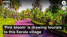A 'pink bloom' is drawing tourists to this Kerala village