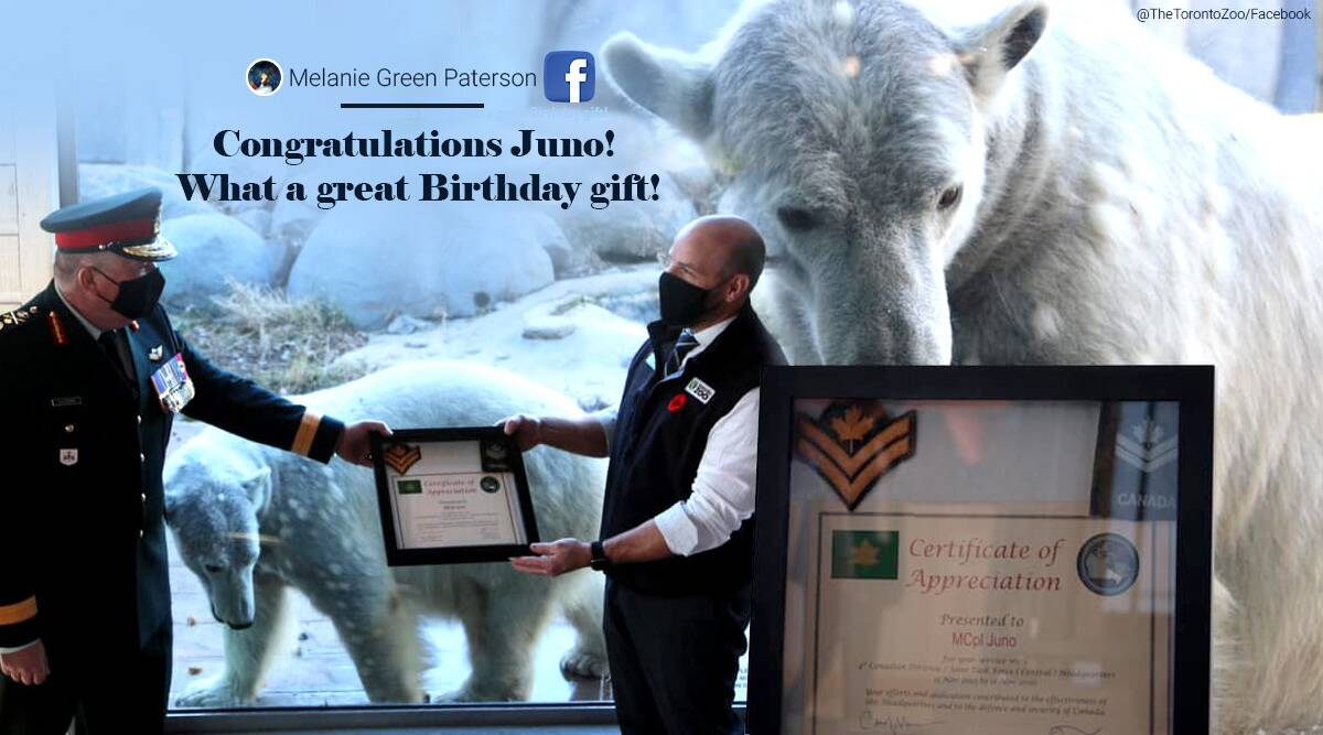 Polar bear promotion, Canadian Army, polar bear, honorary master corporal, Canadian Remembrance Day, Canada news, Canadian army honorary master corporal polar bear, Indian Express news