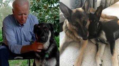 joe biden pet dogs, major and champ, dotus