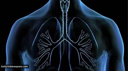lungs, study, pandemic, covid-19