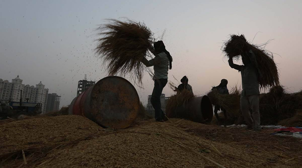 Record govt purchases of cotton, paddy from Punjab