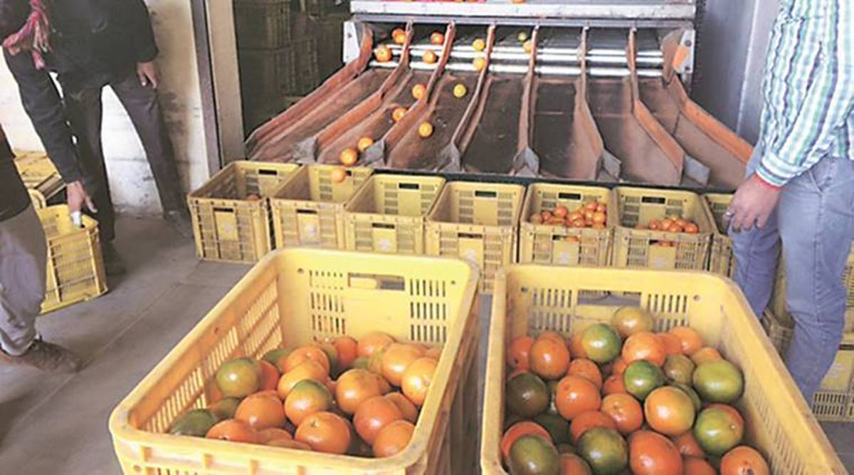 Gujarat: Sarhad Dairy to set up fruit processing plant