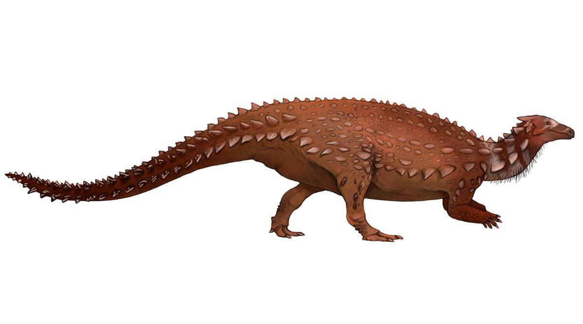 Fossils discovered in Antrim turn out to be only dinosaur bones found in Ireland - The Indian Express