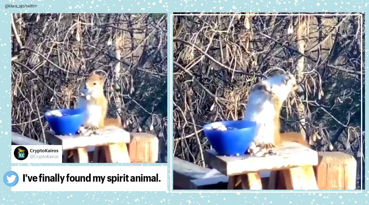 Squirrel, Drunk squirrel, fermented pear, Minnesota, Viral video, Trending news, Indian Express news