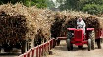 UP cane farmers look at pay hurdle as mills say crushing more, getting less sugar