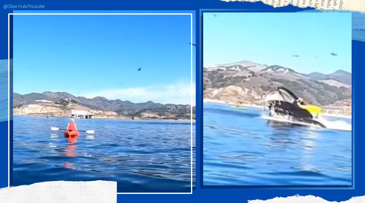Hunchback whale, hunchback whale swallow kayakers, hunchback whale encounter California, hunchback whale kayakers encounter viral video, hunchback whale viral video, Trending news, Indian Express news.