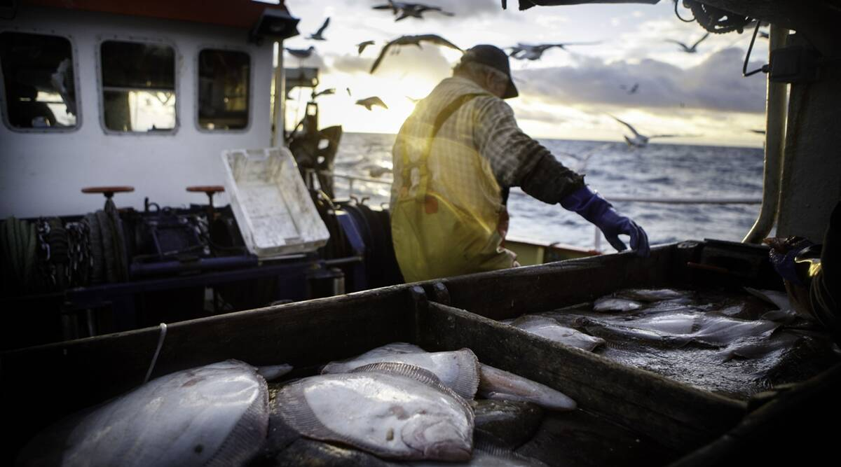 Brexit, Britain Fishing, Brexit trade deal