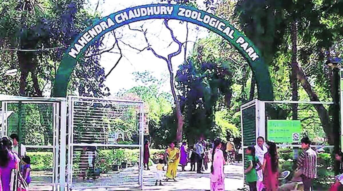 Chhatbir Zoo reopened, Chandigarh Zoo reopened, Chandigarh news, Punjab news, Indian express news