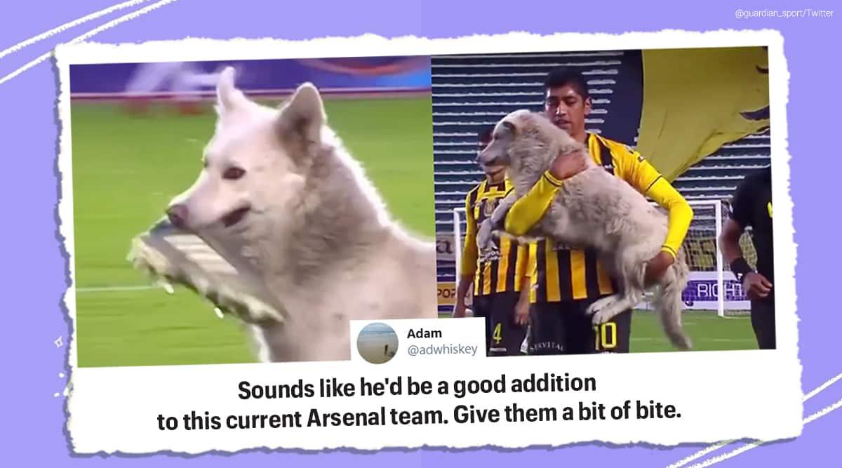 Bolivia, football game, Dog interrupts football game, Dog professional football game, The Strongest and Nacional Potosi football match, Dog video, Viral video, Trending news, Indian express news