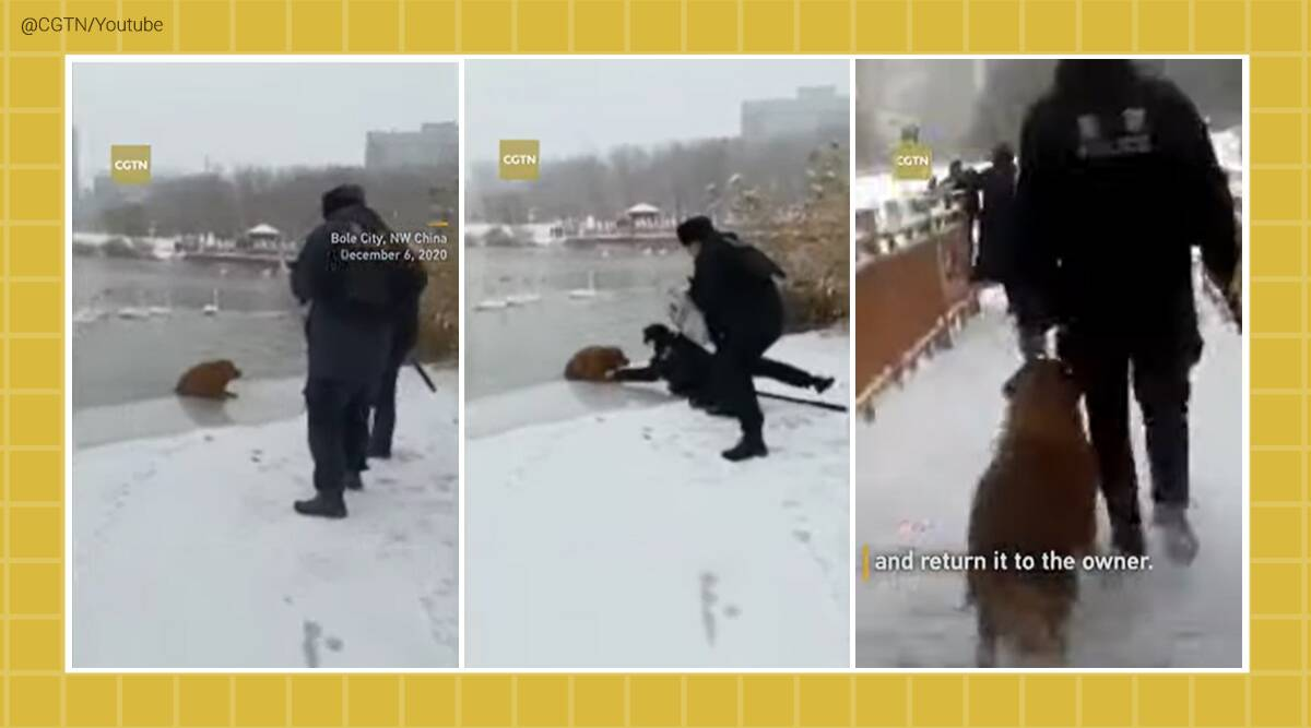 Dog rescue, China, frozen lake, Dog rescue from frozen lake, dog on ice sheet, golden retriever frozen lake china, Dog rescue video, golden retriever rescue video, Dog rescue frozen lake, Chinese police officers, Xinjiang, Viral video, Trending news, Indian Express news.