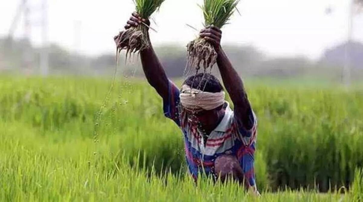 Behind reduction in agriculture budget, lower spending under PM-Kisan